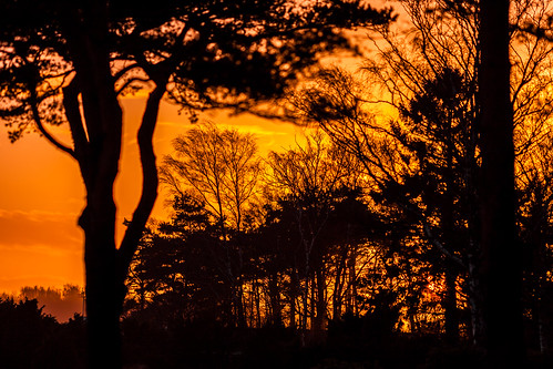 trees sunset orange nature silhouette yellow landscape photography coast photo europe sweden january coastal photograph 100 sverige scandinavia f28 2012 200mm halland onsala fav10 2013 ef200mmf28liiusm ¹⁄₁₂₅₀sec mabrycampbell january12013 201301011924
