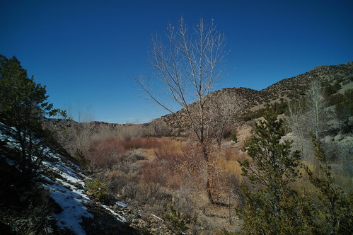 snow willow creeks