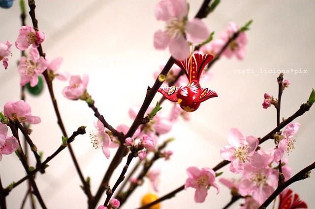 cherry_bird_1