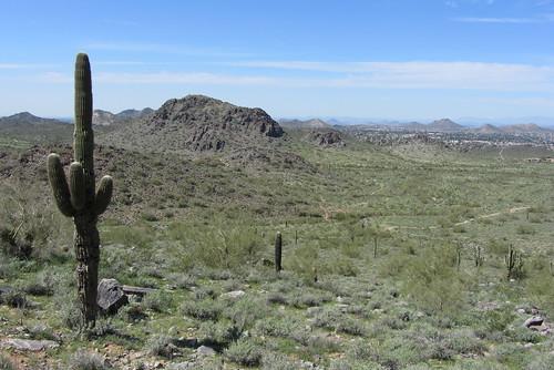 Arizona25