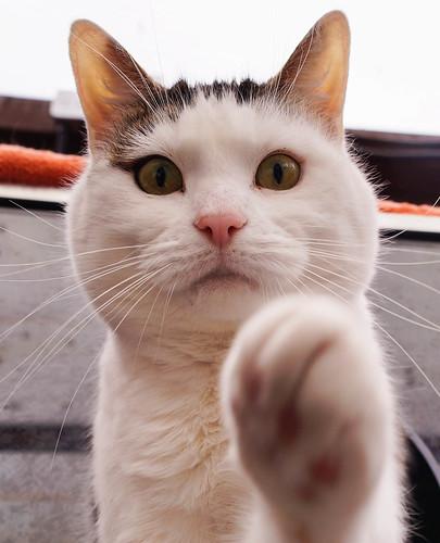 [フリー画像素材] 動物 (哺乳類), 猫・ネコ ID:201304021000
