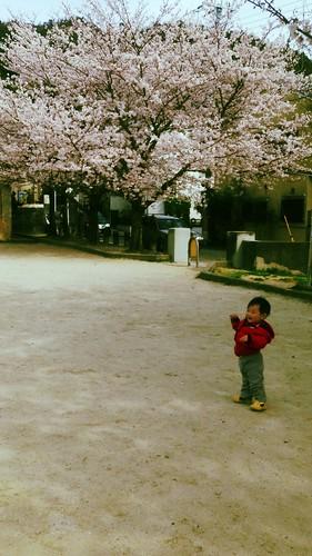 101 櫻花樹下練走路