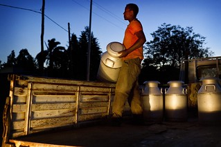 Collecting Milk for Transport in Ethiopia: A man loads milk containers into a truck