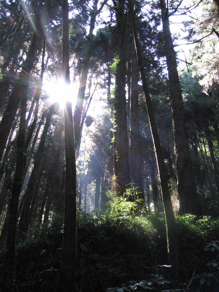 迷霧森林中,充滿許多我們還不知道的聲音/生命。圖片提供:范欽慧。