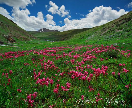 Deosai national Park, Pakistan
