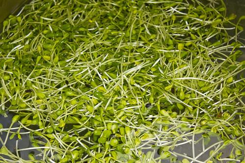 018_Vincent-Mina_Kahanu-Aina-Greens_mauitime