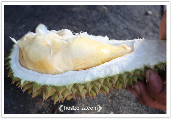 8617156044 1c2af71dab z durian paling sedap