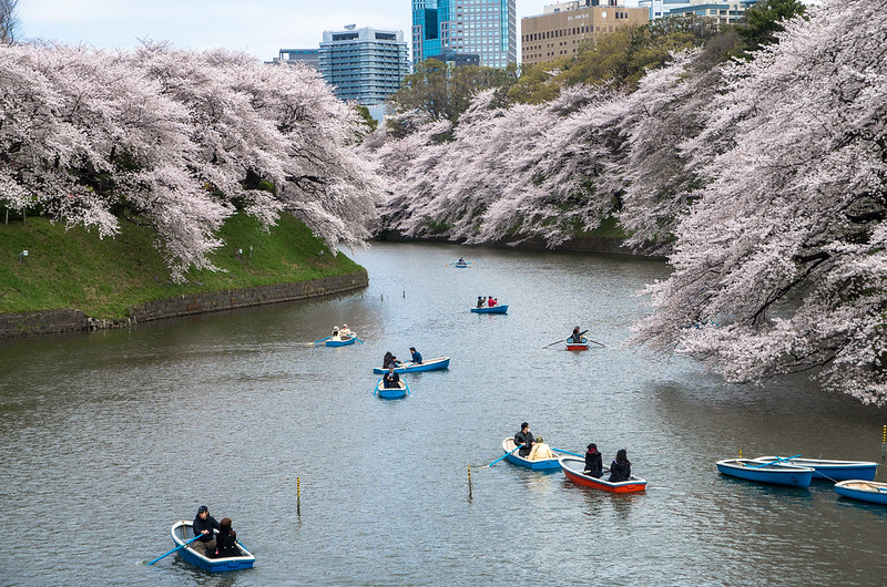 Boaters getting a good view of the cherry blossoms lining Chidorifaguchi River