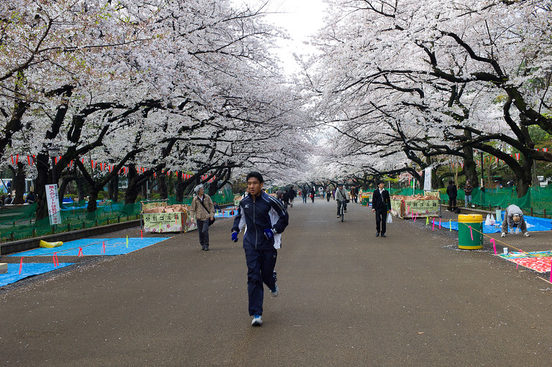 An early morning jogger at Ueno Park