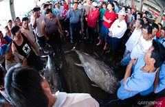 東港漁獲拍賣現場。(圖片來源:台灣綠色和平)
