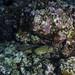 moray eel with squirrel fish