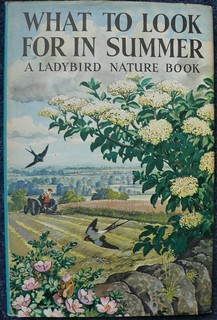 A Ladybird Nature Book: What to look for in Summer