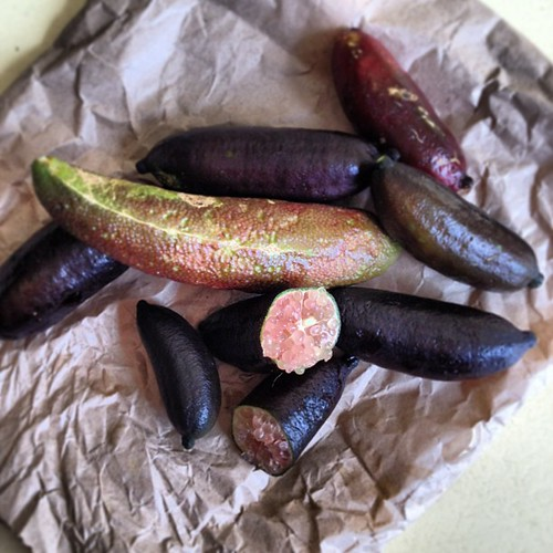 Finger Limes #bushtucker #australia #native from @nearriverproduc @vanityfare1