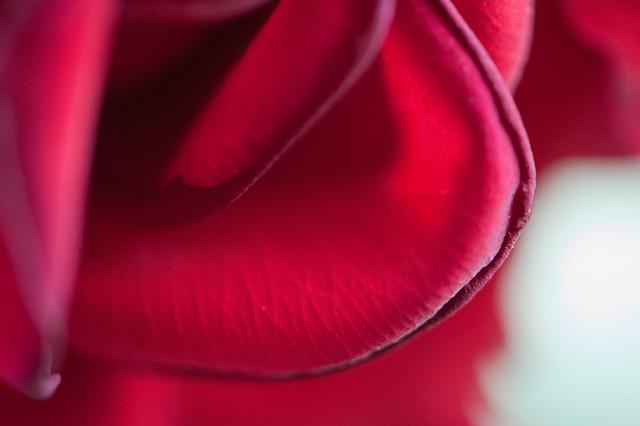 043 rose