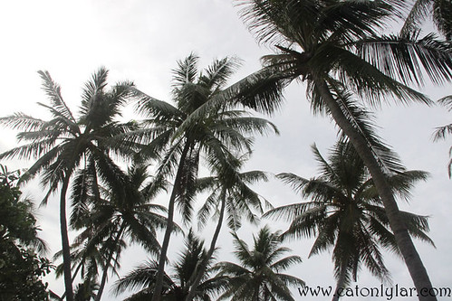 Coconut Trees, Bandos Island Resort & Spa