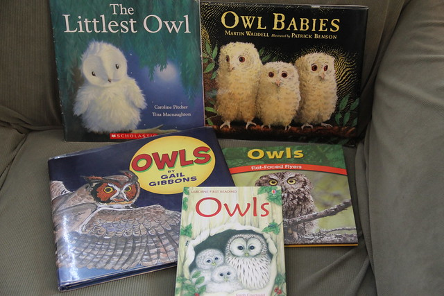 Owl moon unit study homeschool