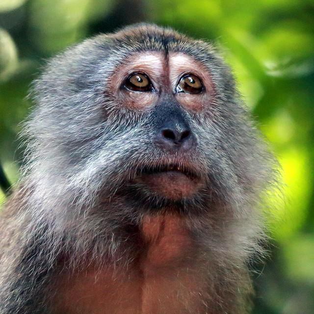 sad monkey face rainforest animal clip art line rainforest animal clipart printable