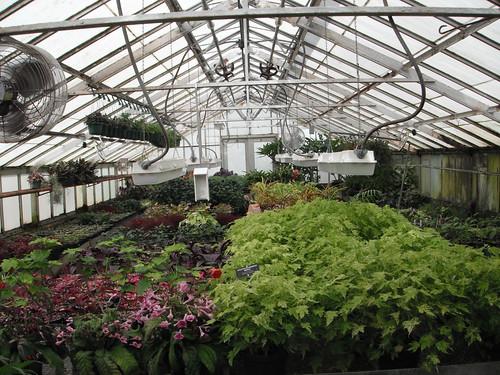 9-17-2010_75_Buffalo_Botanical_Gardens