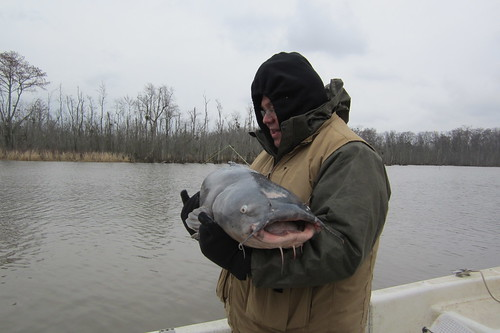 catfishing 033