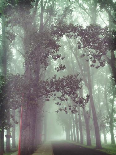 Niebla entre los árboles. by navirelover