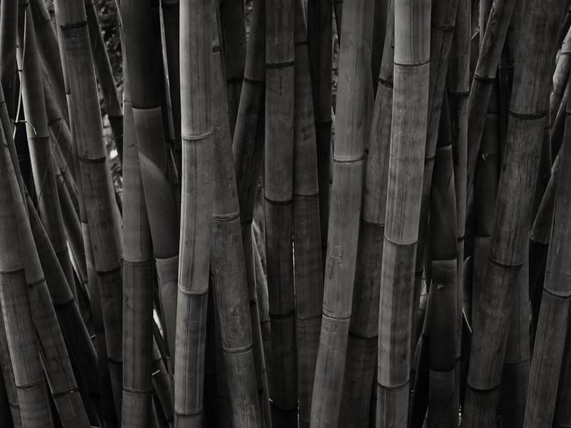 Mt Coot-tha Botanic Garden, Brisbane, QLD