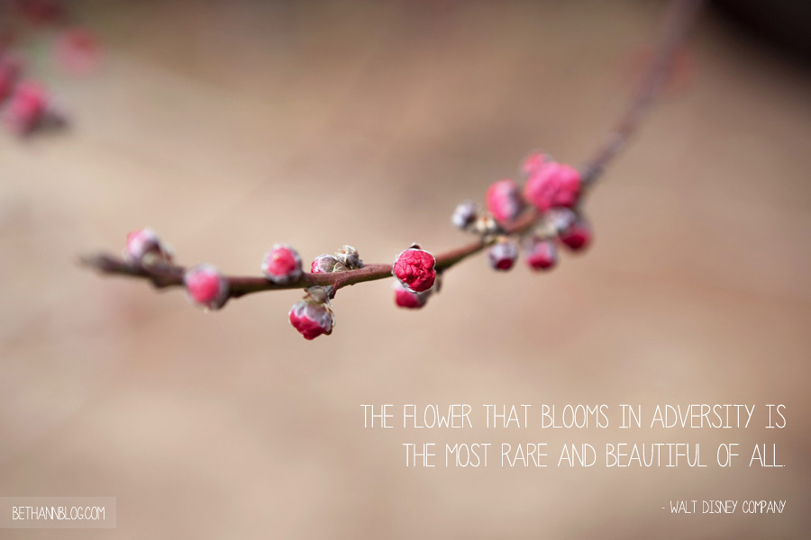 Quote : The flower that blooms in adversity is the most rare and beautiful of all