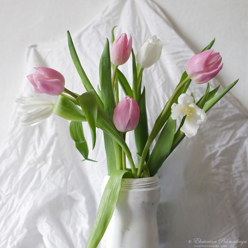 tulip_draw_02