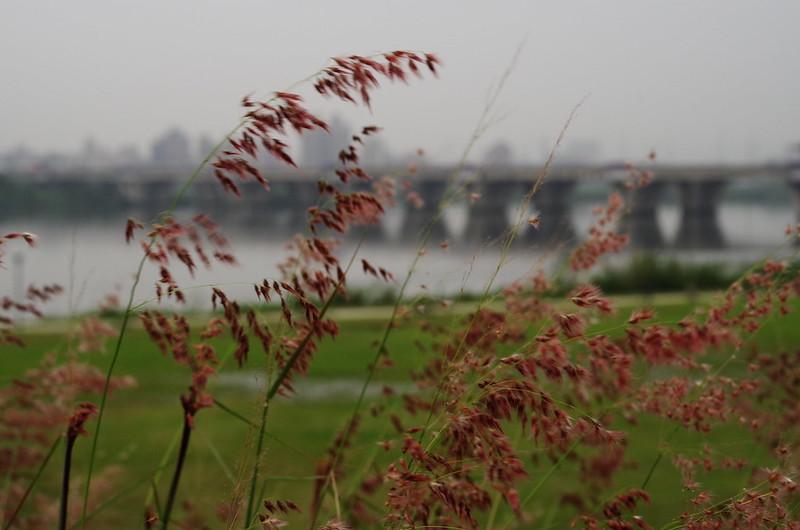 K-01 4/4陰天的河堤