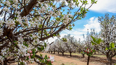 Apple Country Orchard