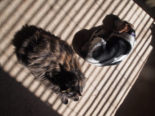 Cat & dog & stripes