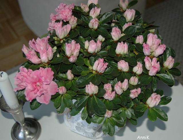 Kukkia 006