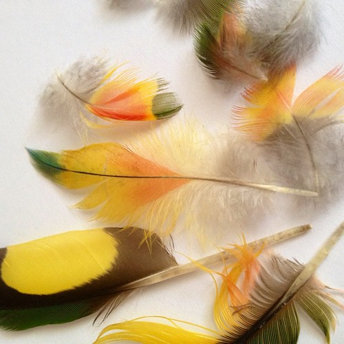 just found these beautiful #feathers wrapped in paper in my glovebox from can't remember when #found