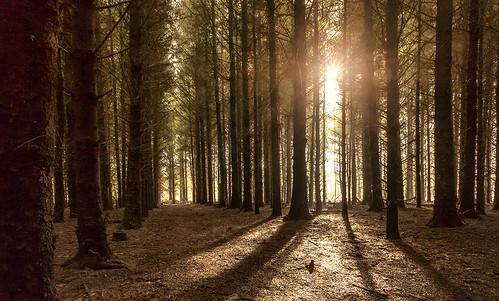 sun sunrise woods bos zon trimunt