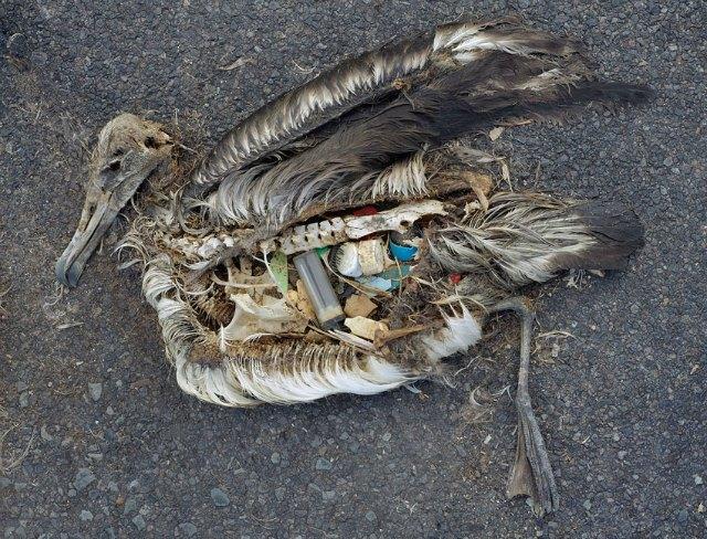 pacifico-basura2-diarioecologia