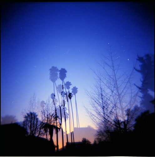california trees sunset 120 film analog berkeley holga lomo lomography doubleexposure lofi multipleexposure palmtrees pinksky 120mm 120n lowfidelity