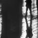 A Shadowy Selfie by CVerwaal