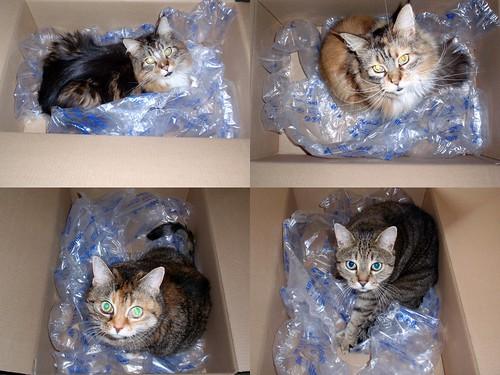 4 Katzen in Kartons auf Luftpolsterfolie