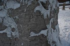 Snow Covered Limestone