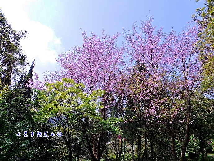 9 大屯自然公園