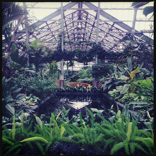 Scouting locations for a wedding at the Garfield Park Conservatory. #wedding #weddingphotography #Chicago #greenhouse