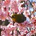 花に囲まれて by hamapenguin