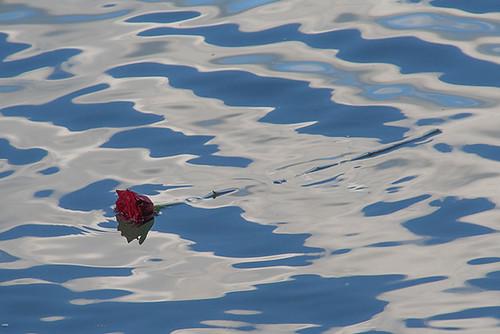 8566806716 2f3918aa54 La rose noyée