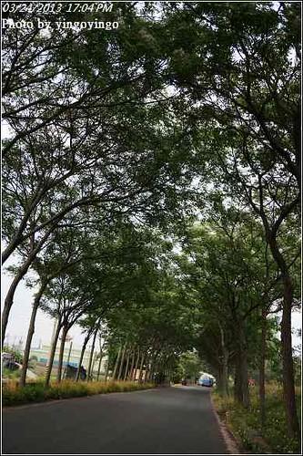 嘉義新港_苦楝花道20130324_ D0441