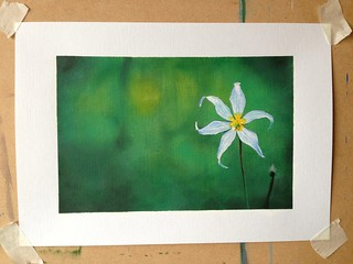 White star flower painting finished! 29 March 2013