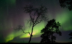 [Free Images] Nature, Aurora, Trees, Night Sky, Landscape - Finland, Green Color ID:201304042000