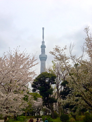Sumida Park View of Sky Tree