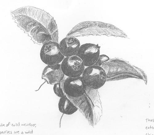 Huckleberry 4