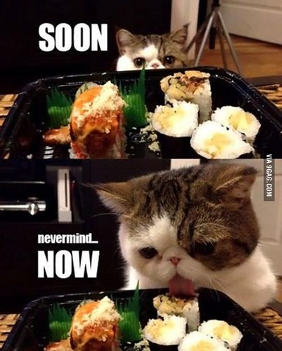 The cat who loves sushi