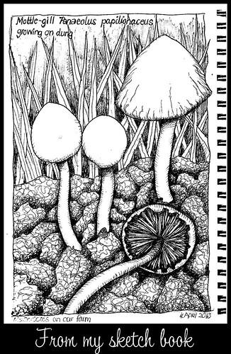 Mushroom 20