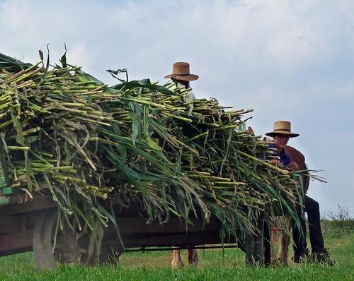 Foto amish en el Condado de Lancaster